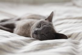 Sleeping cat knows what Christopher Michael, therapist, sometimes has to say to humans about sleep