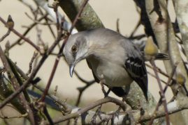 Mockingbird 'just singing' shows us how we can benefit from self-reflection and action; psychotherapy can help